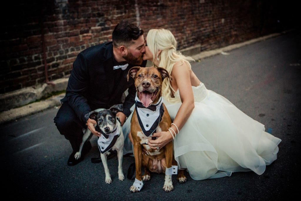 Pups - Asheville - Asheville NC - Wedding Photography - Wedding Photos - Justin Driscoll